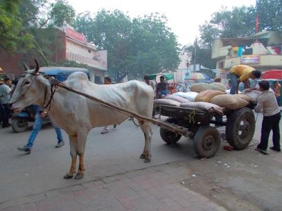 Delhi_05